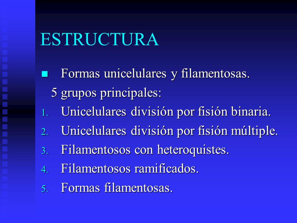 ESTRUCTURA Formas unicelulares y filamentosas.Formas unicelulares y filamentosas.