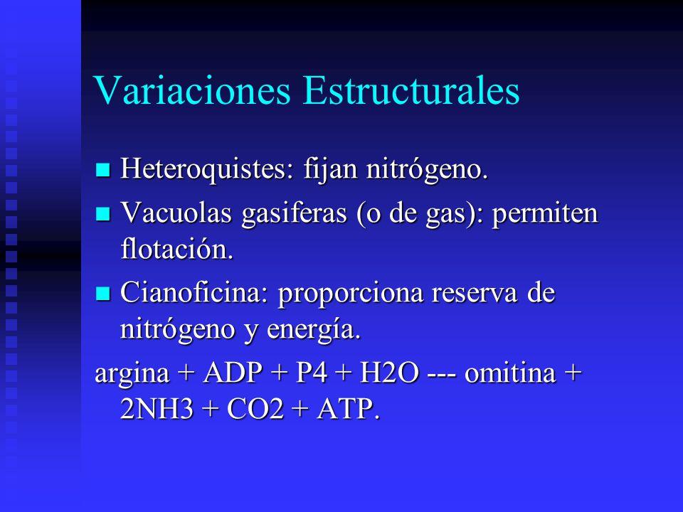 Variaciones Estructurales Heteroquistes: fijan nitrógeno.