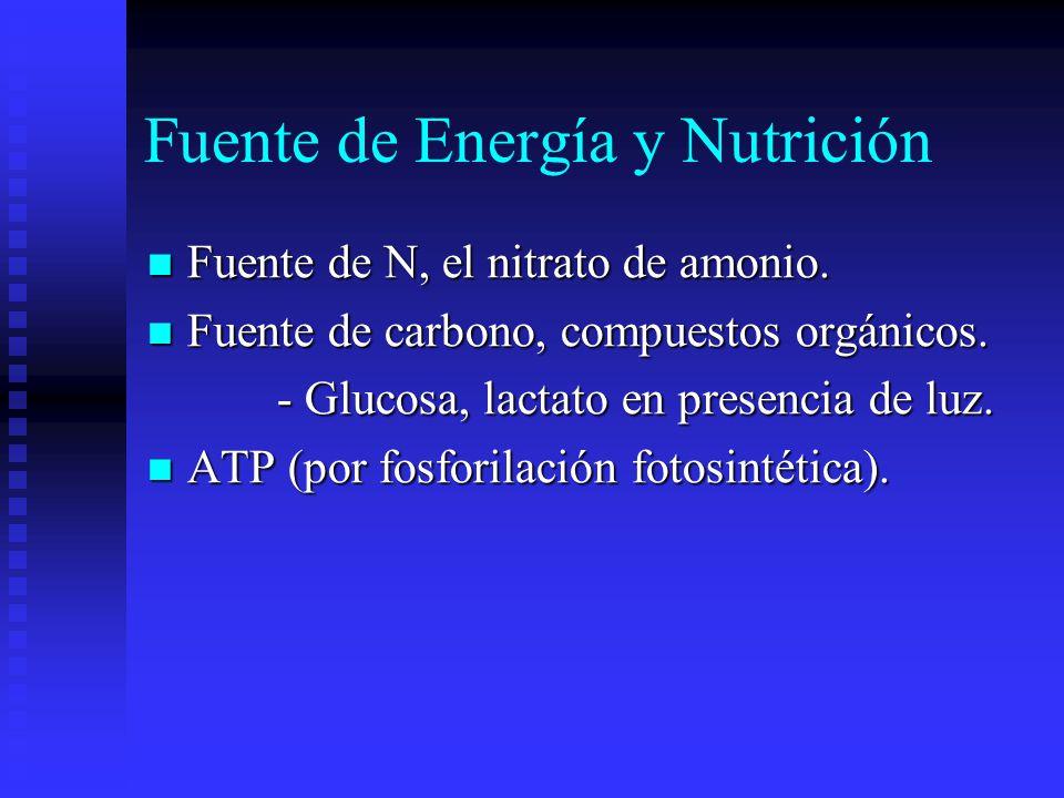 Fuente de Energía y Nutrición Fuente de N, el nitrato de amonio.