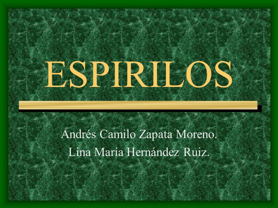 ESPIRILOS Andrés Camilo Zapata Moreno. Lina María Hernández Ruiz.