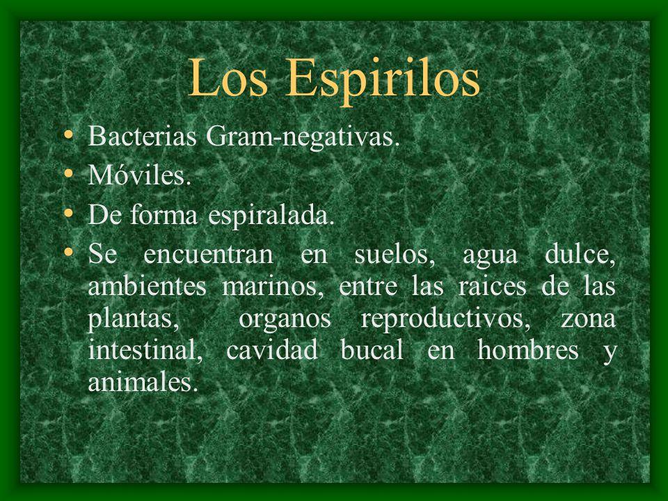 Los Espirilos Bacterias Gram-negativas. Móviles. De forma espiralada. Se encuentran en suelos, agua dulce, ambientes marinos, entre las raices de las