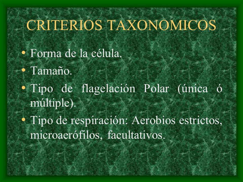 CRITERIOS TAXONOMICOS Forma de la célula. Tamaño. Tipo de flagelación Polar (única ó múltiple). Tipo de respiración: Aerobios estrictos, microaerófilo