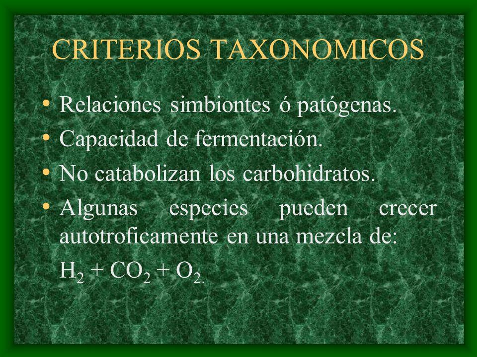 CRITERIOS TAXONOMICOS Relaciones simbiontes ó patógenas. Capacidad de fermentación. No catabolizan los carbohidratos. Algunas especies pueden crecer a