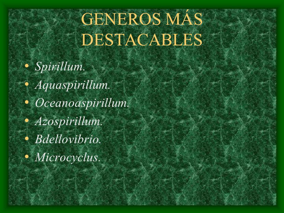 GENEROS MÁS DESTACABLES Spirillum. Aquaspirillum. Oceanoaspirillum. Azospirillum. Bdellovibrio. Microcyclus.