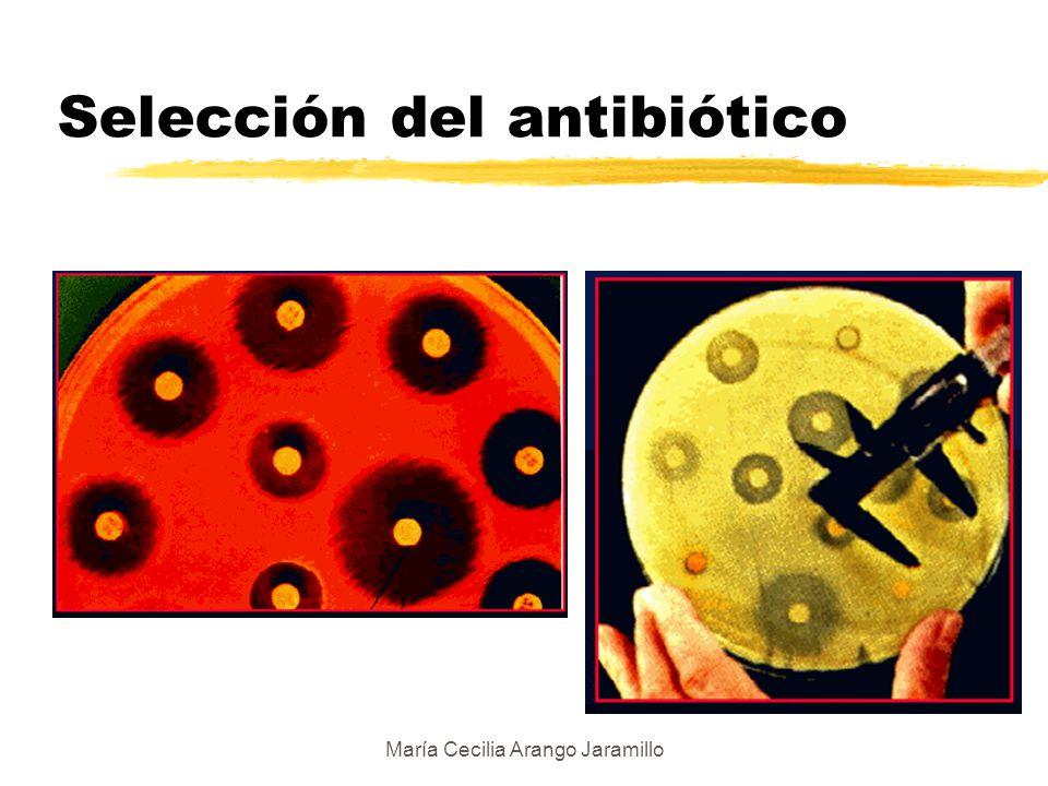 María Cecilia Arango Jaramillo zDiscos de papel de filtro con diferentes antibióticos zSe colocan sobre el agar sembrado zDifusión zInhiben bacterias sensibles