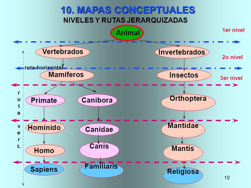 10 Insectos 10. MAPAS CONCEPTUALES NIVELES Y RUTAS JERARQUIZADAS Primate Homínido Sapiens Orthoptera Vertebrados Mantis Mantidae Animal 1er nivel 2o n