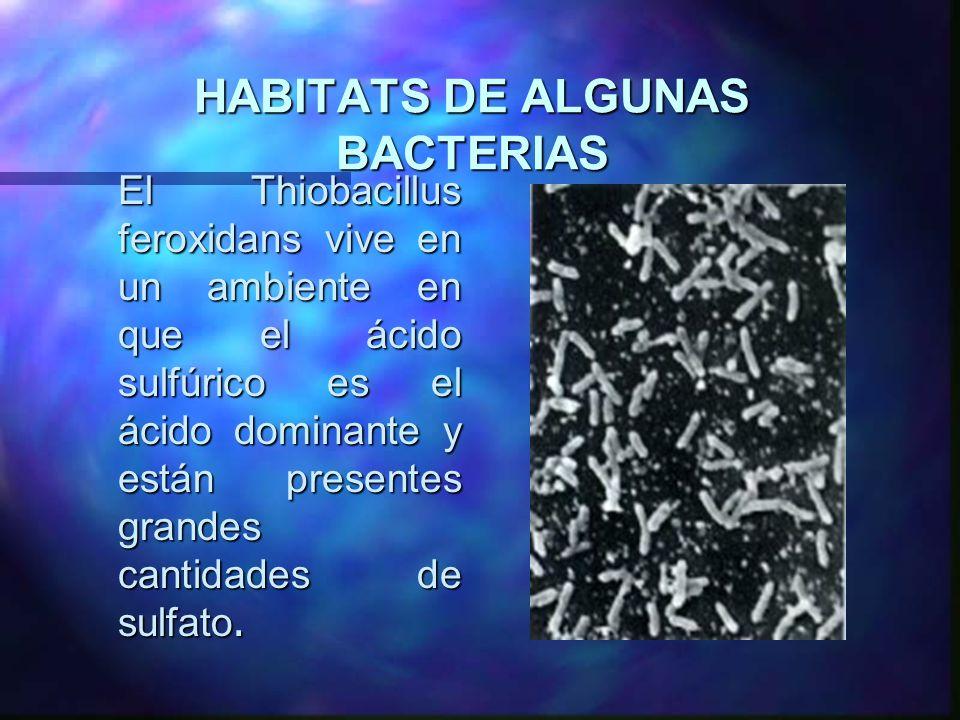 HABITATS DE ALGUNAS BACTERIAS El Thiobacillus feroxidans vive en un ambiente en que el ácido sulfúrico es el ácido dominante y están presentes grandes
