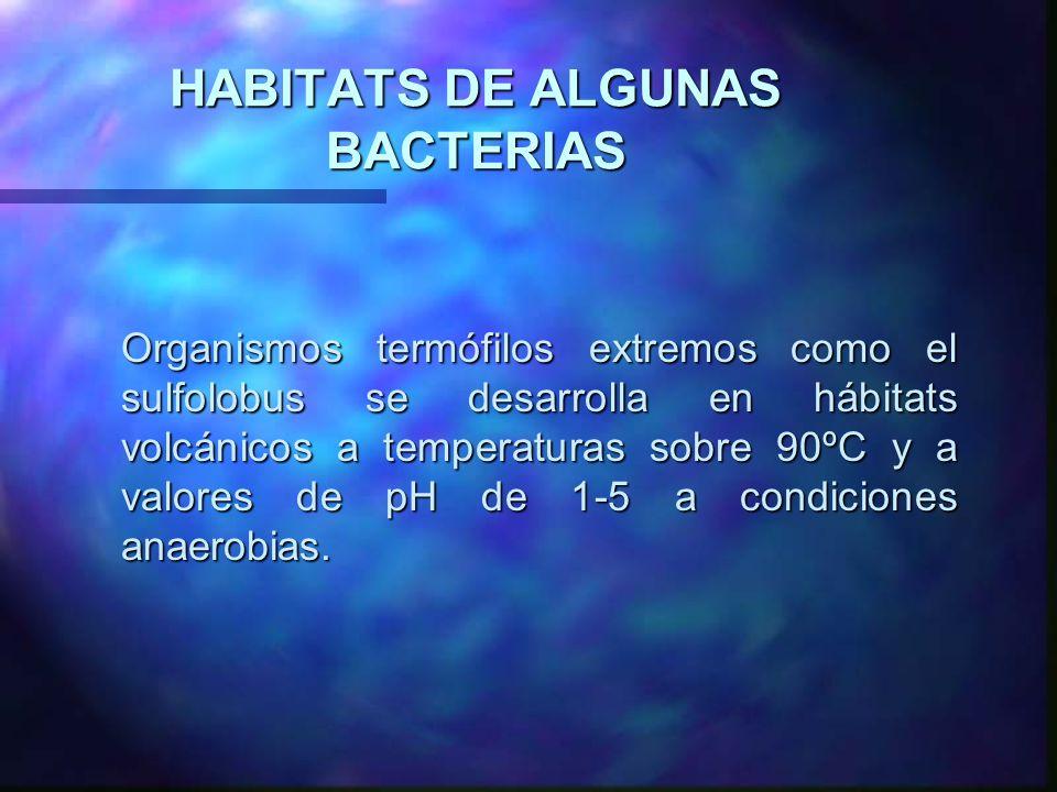 HABITATS DE ALGUNAS BACTERIAS Organismos termófilos extremos como el sulfolobus se desarrolla en hábitats volcánicos a temperaturas sobre 90ºC y a val