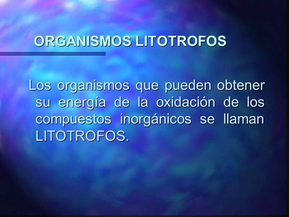 ORGANISMOS LITOTROFOS Los organismos que pueden obtener su energía de la oxidación de los compuestos inorgánicos se llaman LITOTROFOS. Los organismos