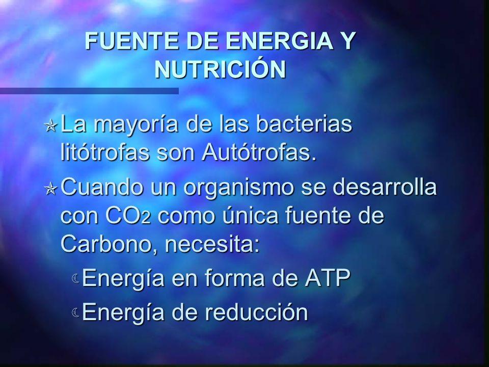 FUENTE DE ENERGIA Y NUTRICIÓN Las Bacterias del azufre toman compuestos de este como el sulfuro de hidrógeno, azufre elemental y el tiosulfato, como fuente de energía.