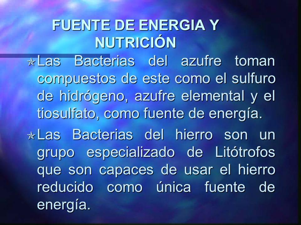FUENTE DE ENERGIA Y NUTRICIÓN Las Bacterias del azufre toman compuestos de este como el sulfuro de hidrógeno, azufre elemental y el tiosulfato, como f