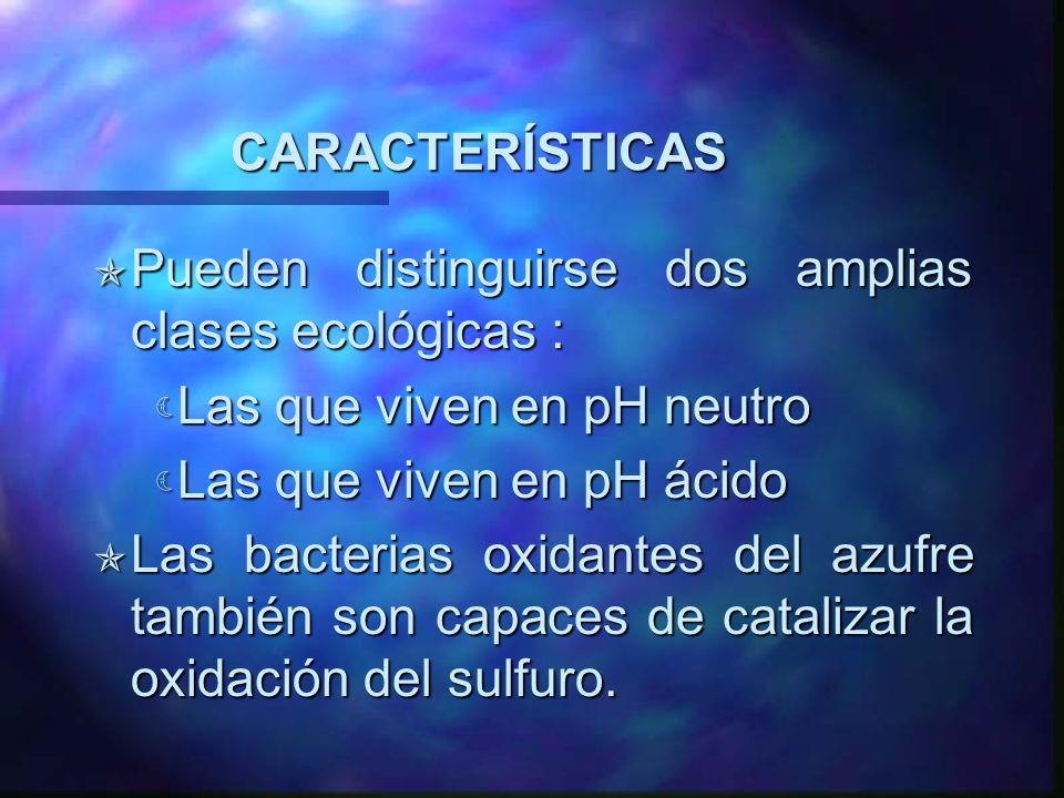 CARACTERÍSTICAS Pueden distinguirse dos amplias clases ecológicas : Pueden distinguirse dos amplias clases ecológicas : Las que viven en pH neutro Las