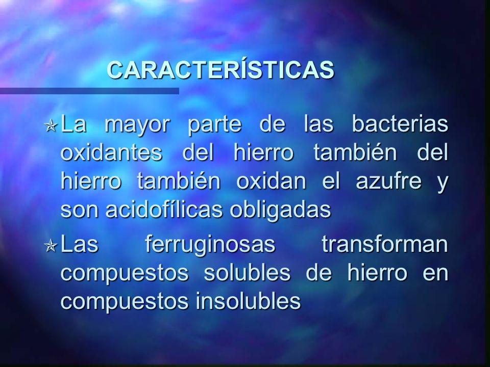 CARACTERÍSTICAS La mayor parte de las bacterias oxidantes del hierro también del hierro también oxidan el azufre y son acidofílicas obligadas La mayor
