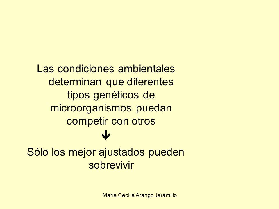 María Cecilia Arango Jaramillo Genotipo: La información genética de cada individuo Fenotipo:La expresión del genoma afectada por el medio ambiente Los microorganismos se acomodan a los cambios temporales del ambiente adaptación fenotípica Mediante la adaptación fenotípica: Respuesta del microorganismo a cambios temporales Está limitada por el genotipo.