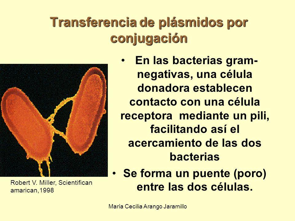 María Cecilia Arango Jaramillo Robert V. Miller, Scientifican american,1998