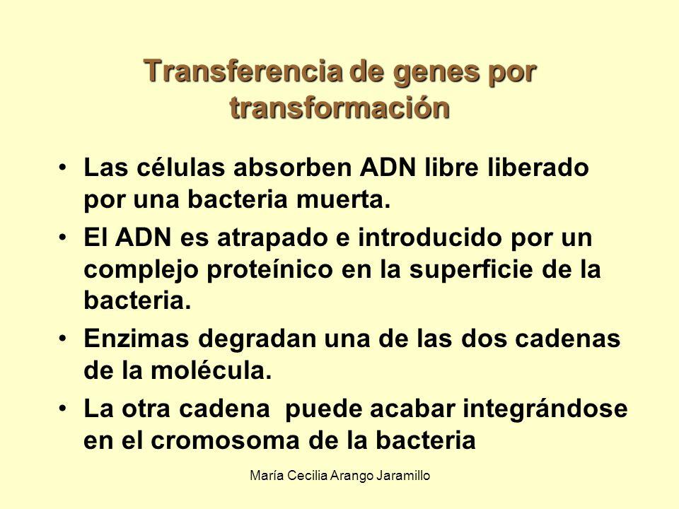 María Cecilia Arango Jaramillo En la bacterias gram-positivas la conjugación es similar.