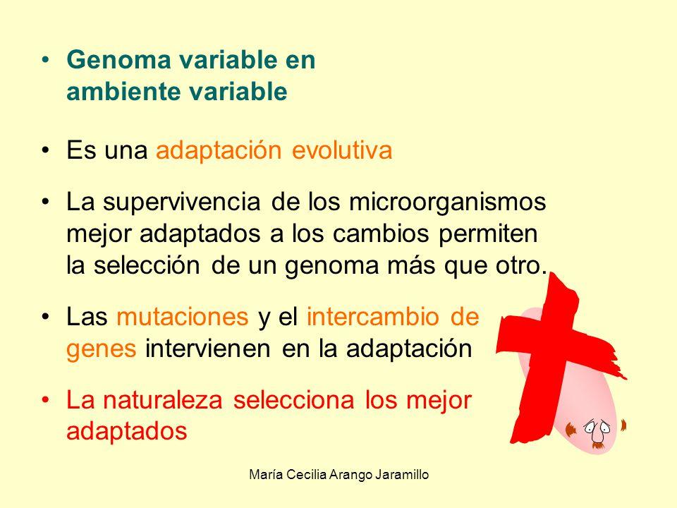 María Cecilia Arango Jaramillo Genoma variable en ambiente fijo Adaptación genética : Los factores ambientales no cambian, el genoma es el factor variable: Por mutación espontánea o inducida Por intercambio genético