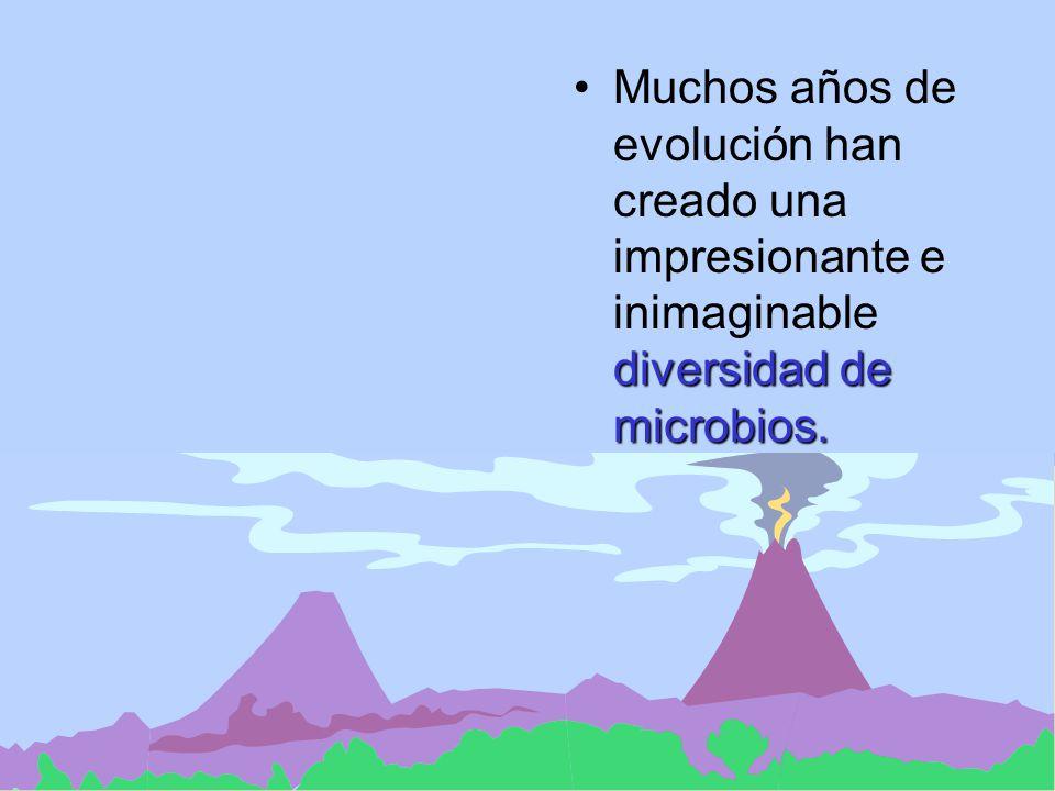 María Cecilia Arango Jaramillo Diversidad de especies microbianas Los microbios nos rodean por todas partes: aire, agua, suelo.