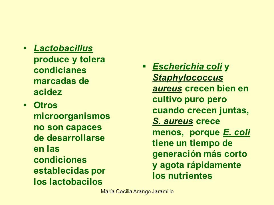 María Cecilia Arango Jaramillo Antibiosis: Una mixobacteria aislada de un estanque de peces lisa muchas especies de algas verdeazules unicelulares o filamentosas y otras bacterias.