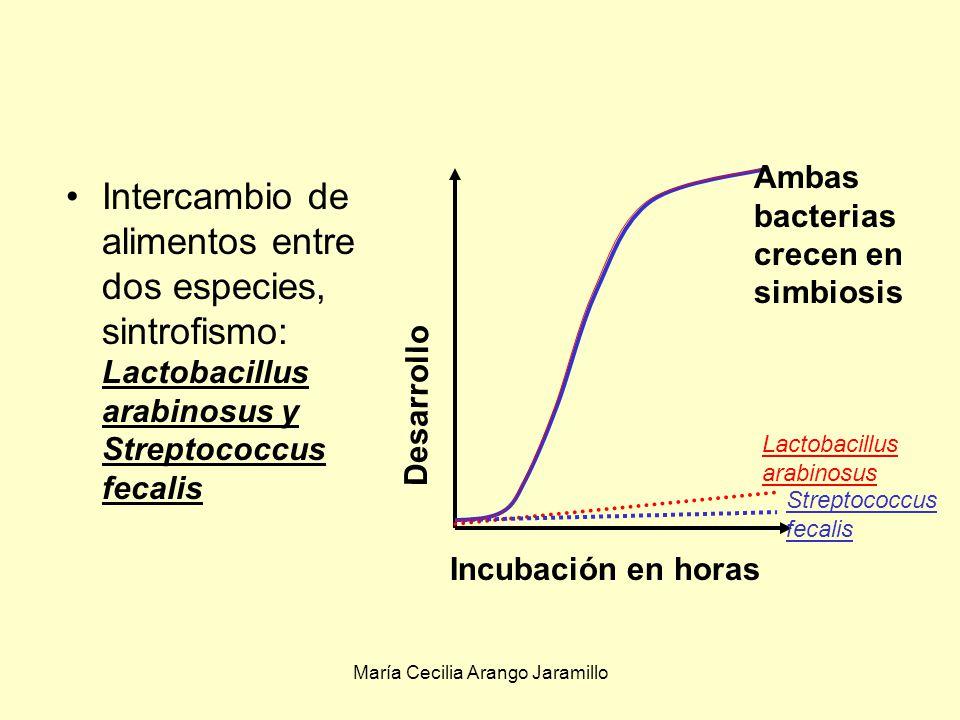 María Cecilia Arango Jaramillo Simbiosis en que ambos organismos resulta benefiados cooperaciónCuando la relación no es obligatoria se le llama cooperación Mutualismo, +/+: