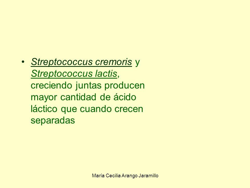María Cecilia Arango Jaramillo Saccharomyces cereviciae produce ornitina a partir de arginina Escherichia coli transforma la ornitina en putrescina Escherichia coli y Steeptococcus fecalis: Creciendo juntas producen putrescina a partir de la arginina Separadas no la producen