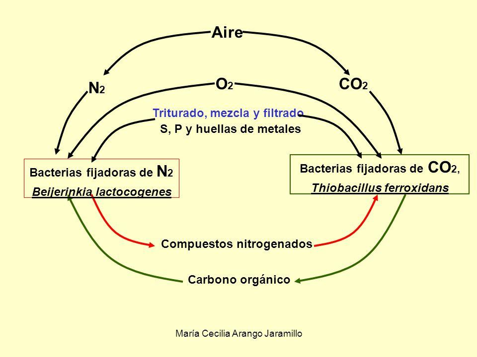 María Cecilia Arango Jaramillo Producción de metabolitos diferentes.