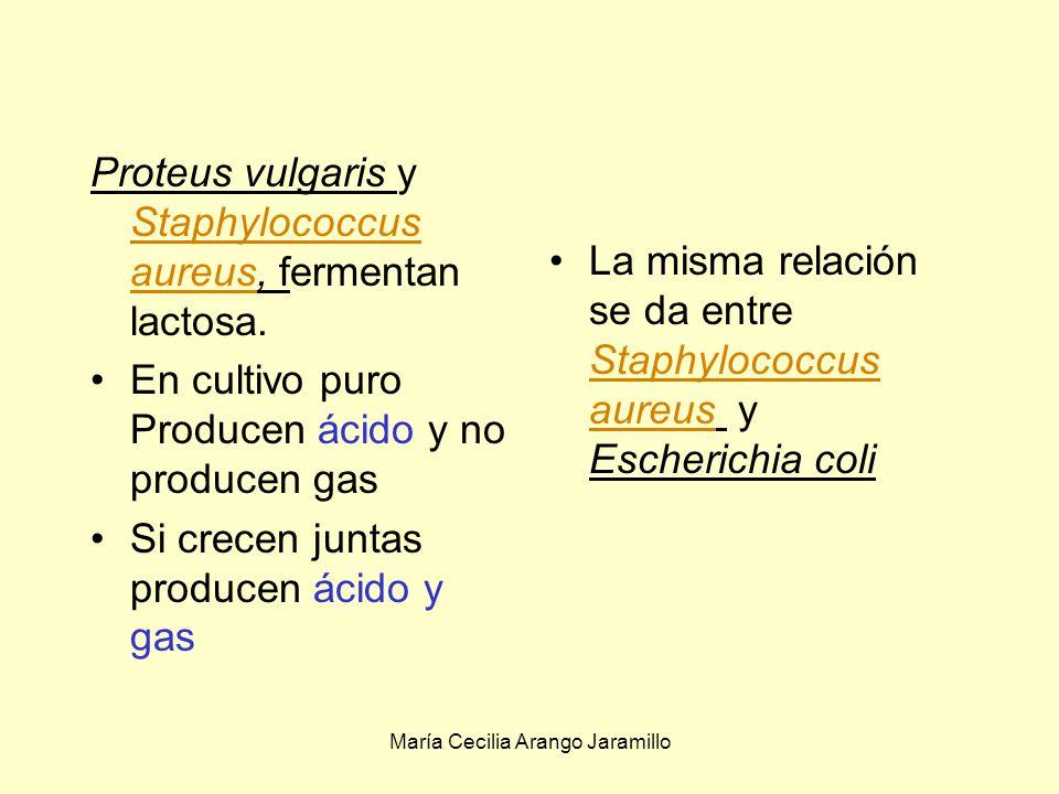 María Cecilia Arango Jaramillo Compuestos nitrogenados Carbono orgánico Aire O2O2 CO 2 N2N2 Bacterias fijadoras de N 2 Beijerinkia lactocogenes Bacterias fijadoras de CO 2, Thiobacillus ferroxidans S, P y huellas de metales Triturado, mezcla y filtrado