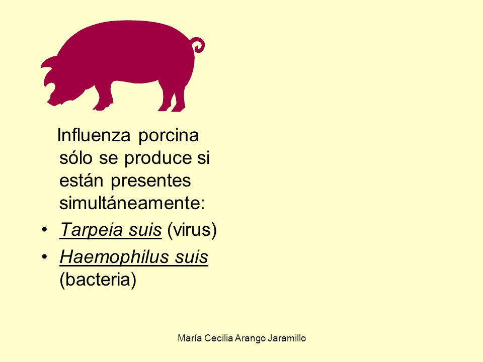 María Cecilia Arango Jaramillo Saccharomyces cereviciae produce ácido nicotínico necesario para el crecimiento de Proteus vulgaris Las bacterias anaerobias productoras de metano le proporcionan la materia prima necesaria a las que oxidan metano Las bacterias heterótrofas producen iones amonio necesarios para Nitrosomonas