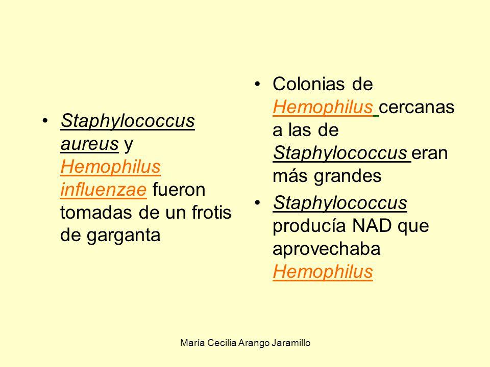 María Cecilia Arango Jaramillo Las asociaciones comensales permiten el desarrollo de especies anaerobias y facultativas en medios aeróbicos