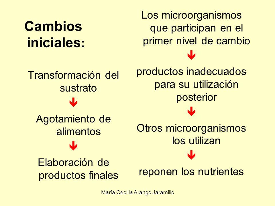 María Cecilia Arango Jaramillo Suministro de alimento En los hábitats naturales la cantidad de alimento es mucho menor que en medios de laboratorio Los cambios en la naturaleza química y en la composición de los materiales nutritivos tienen influencia selectiva en la microbiota