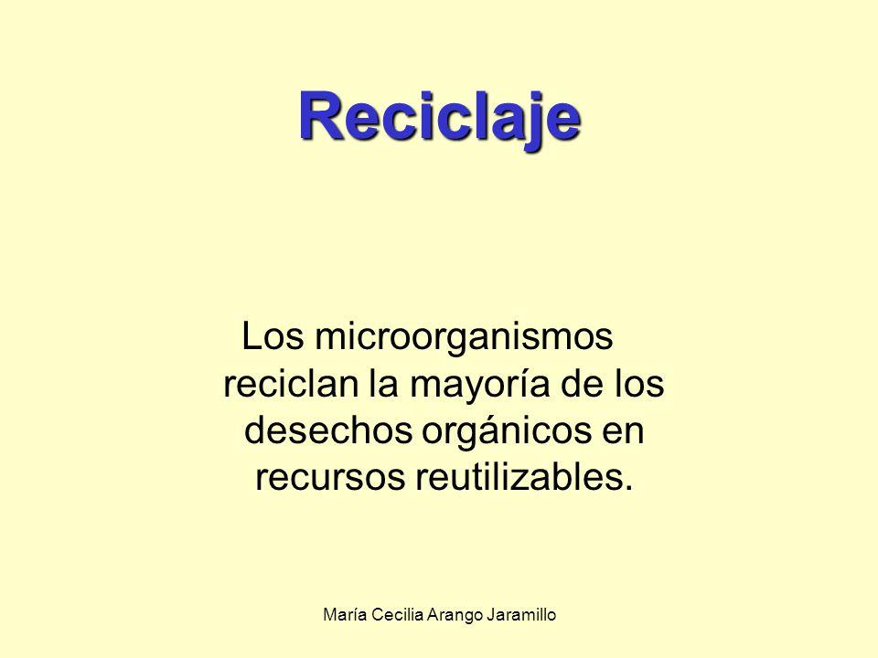 María Cecilia Arango Jaramillo Mientras tanto, los microbios desempeñarán un papel dominante en la exploración y colonización del espacio.