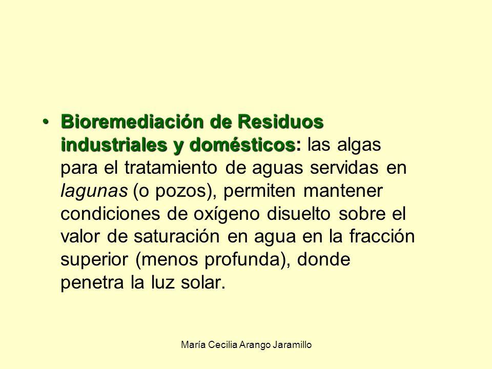 María Cecilia Arango Jaramillo Los microbios se utilizan para limpiar: Bioremediación de residuos tóxicos:Bioremediación de residuos tóxicos: Uso de microbios para la limpieza de residuos tóxicos.