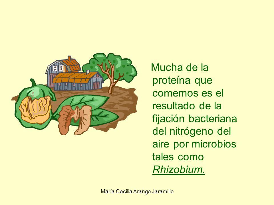María Cecilia Arango Jaramillo Fertilidad de los suelos Dependemos de los cultivos para el sustento y estas cosechas dependen de suelos sanos con su vida microbiana equilibrada.