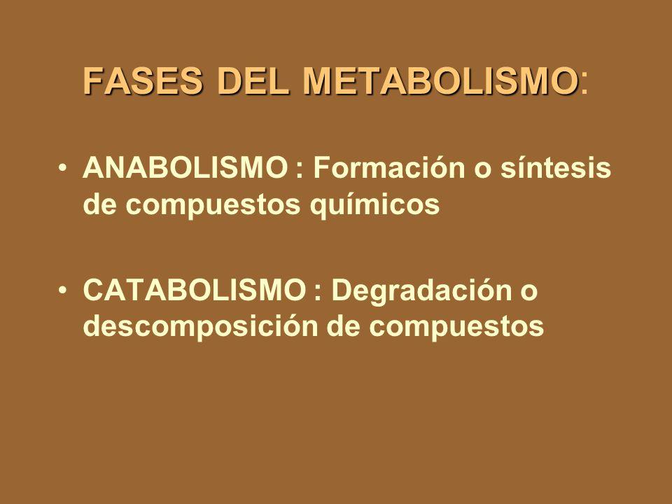 FASES DEL METABOLISMO FASES DEL METABOLISMO : ANABOLISMO : Formación o síntesis de compuestos químicos CATABOLISMO : Degradación o descomposición de compuestos