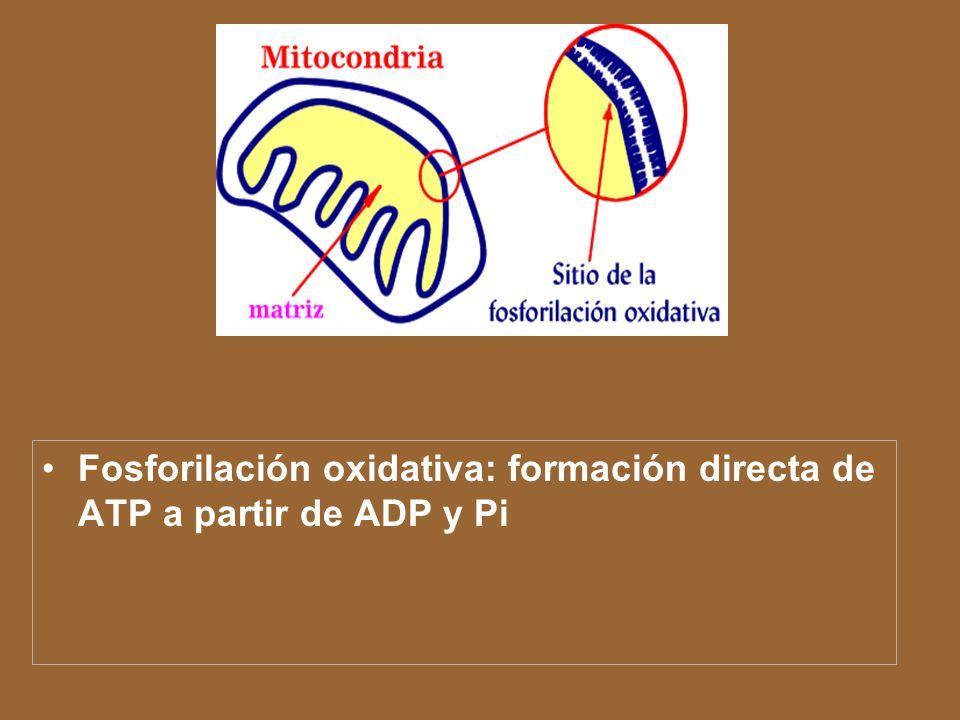 El conjunto de reacciones del ciclo ATC se puede resumir en la siguiente forma: Acetil-CoA + 3H 2 O + 3NAD + + FAD + + ADP + Pi 2CO 2 + CoA + 3NADH 2