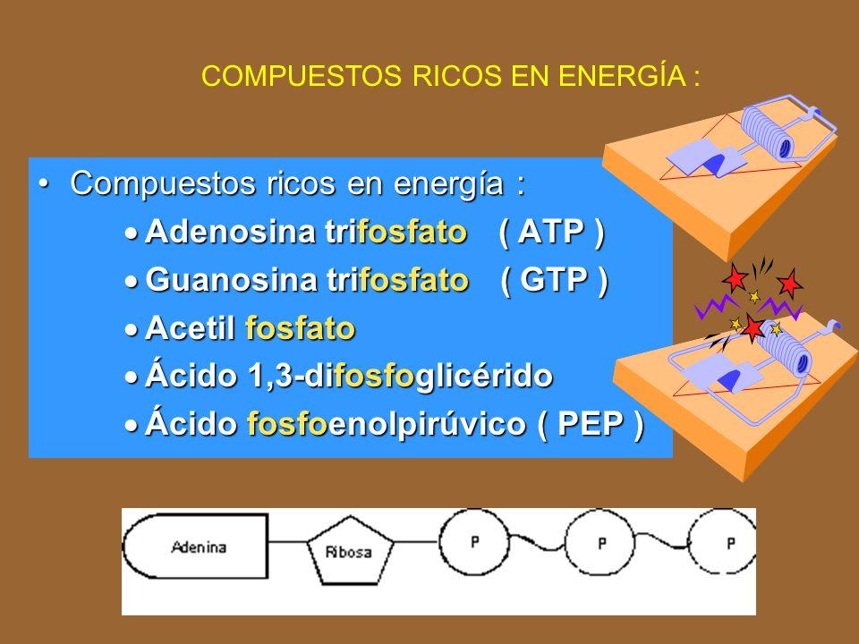 GLUCOSA Ácido pirúvico Ácido acético + Ácido fórmico Ácido succínico Ácido acético Acetona Acetil CoA Ácido fórmico Alcohol etílico CO 2 Ácido acético H2H2 Diferentes rutas de fermentación