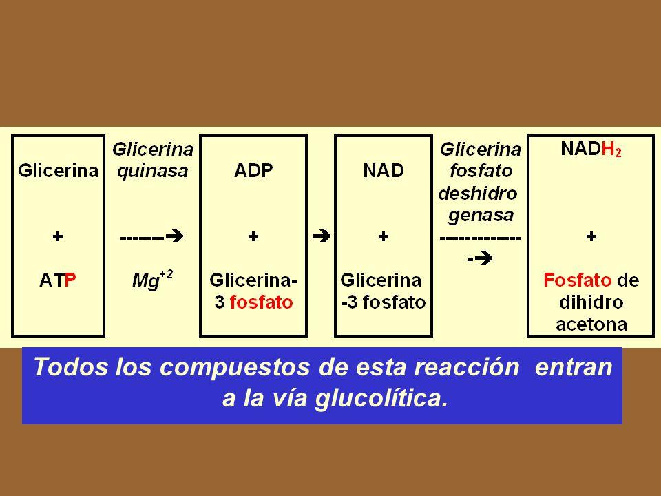 Catabolismo de los lípidos Glicerina Ácido graso Lípido Glicerina 3 Ácidos grasos