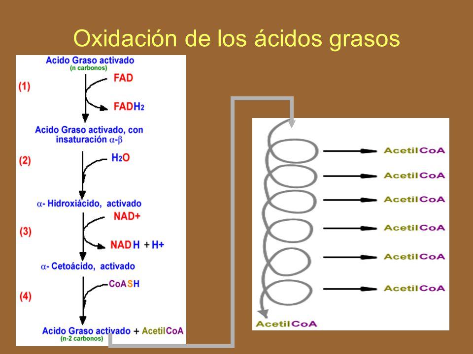 Todos los compuestos de esta reacción entran a la vía glucolítica.