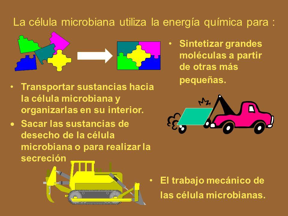 La célula microbiana utiliza la energía química para : Sintetizar grandes moléculas a partir de otras más pequeñas.