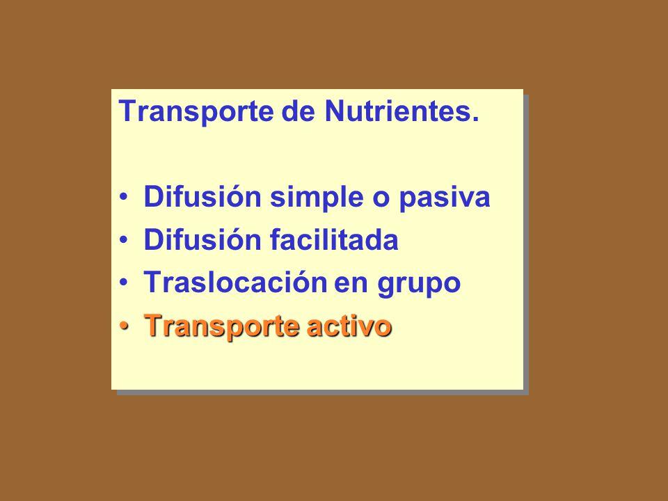 Transporte de Nutrientes.