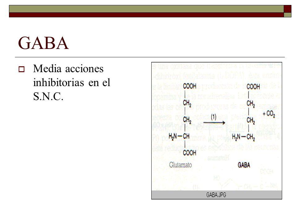 GABA Media acciones inhibitorias en el S.N.C.