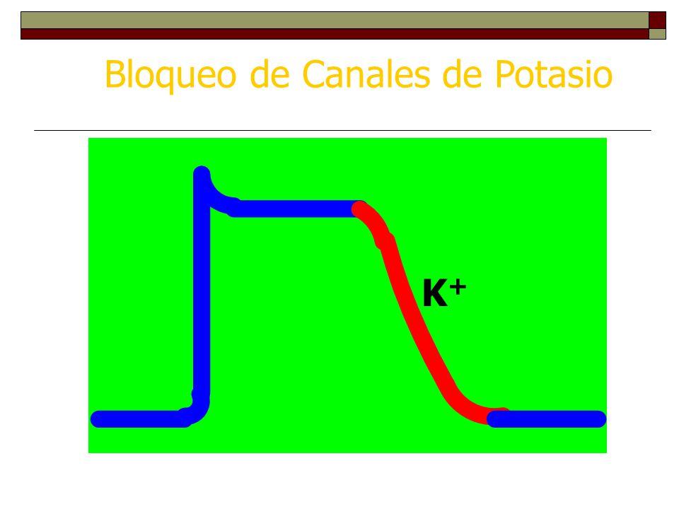 Bloqueo de Canales de Potasio K+K+