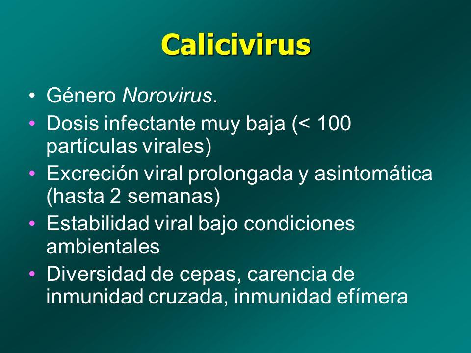 Calicivirus Género Norovirus. Dosis infectante muy baja (< 100 partículas virales) Excreción viral prolongada y asintomática (hasta 2 semanas) Estabil