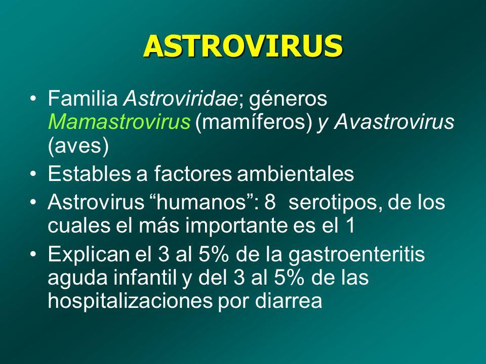 ASTROVIRUS Familia Astroviridae; géneros Mamastrovirus (mamíferos) y Avastrovirus (aves) Estables a factores ambientales Astrovirus humanos: 8 serotip