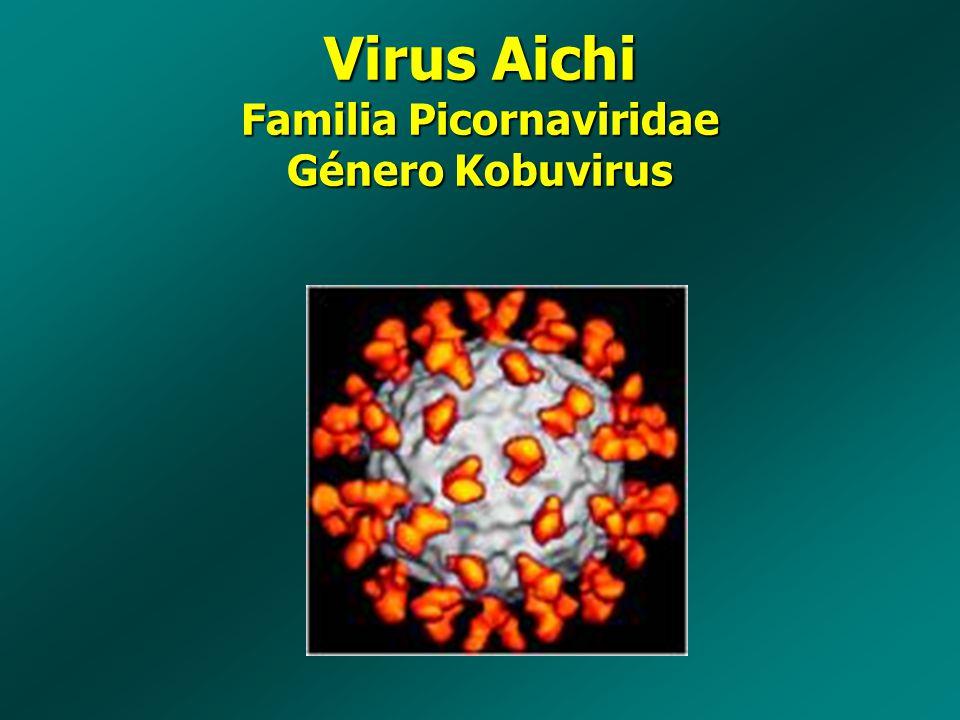Virus Aichi Familia Picornaviridae Género Kobuvirus