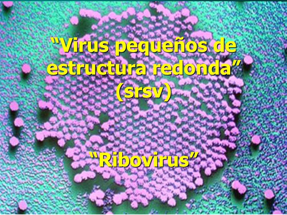 Coronavirus Familia Coronaviridae Géneros Coronavirus y Torovirus Sars-Cov: enfermedad respiratoria y gastrointestinal.