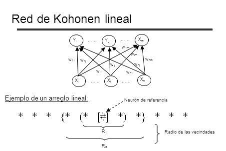 Red de Kohonen lineal YJYJ XmXm YiYi XiXi XnXn XiXi w 11 w i1 w n1 w 1j w ij w nj w nm w im w 1m …… Ejemplo de un arreglo lineal: Neurón de referencia