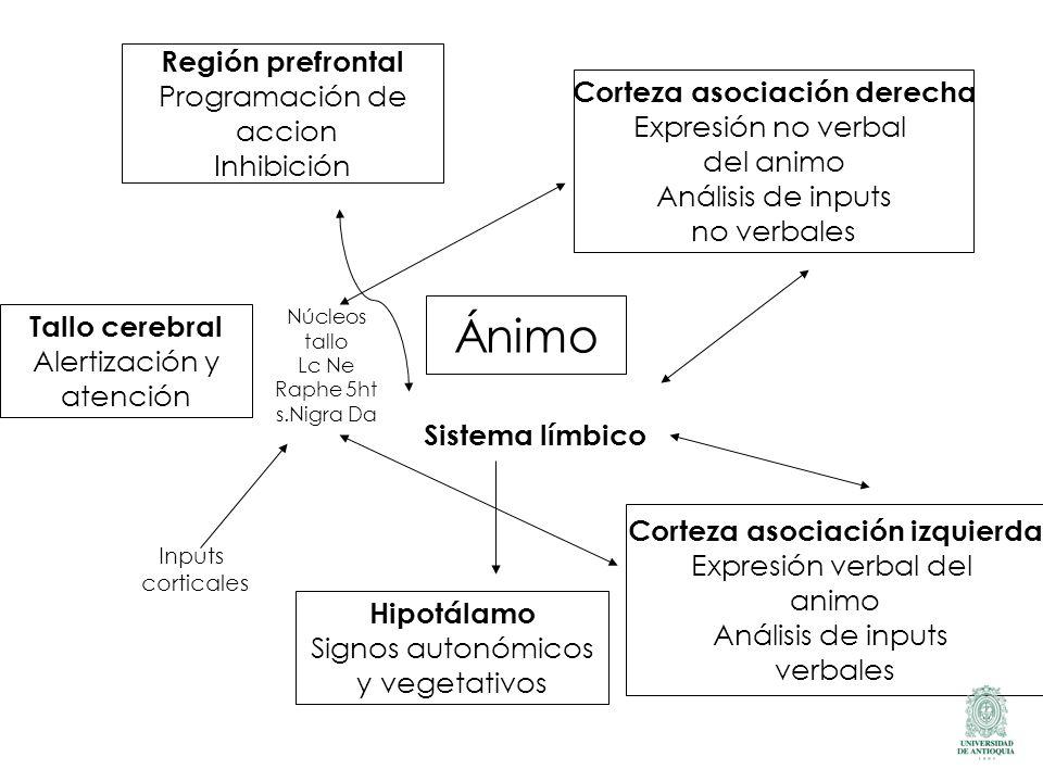 Ánimo Región prefrontal Programación de accion Inhibición Corteza asociación derecha Expresión no verbal del animo Análisis de inputs no verbales Cort