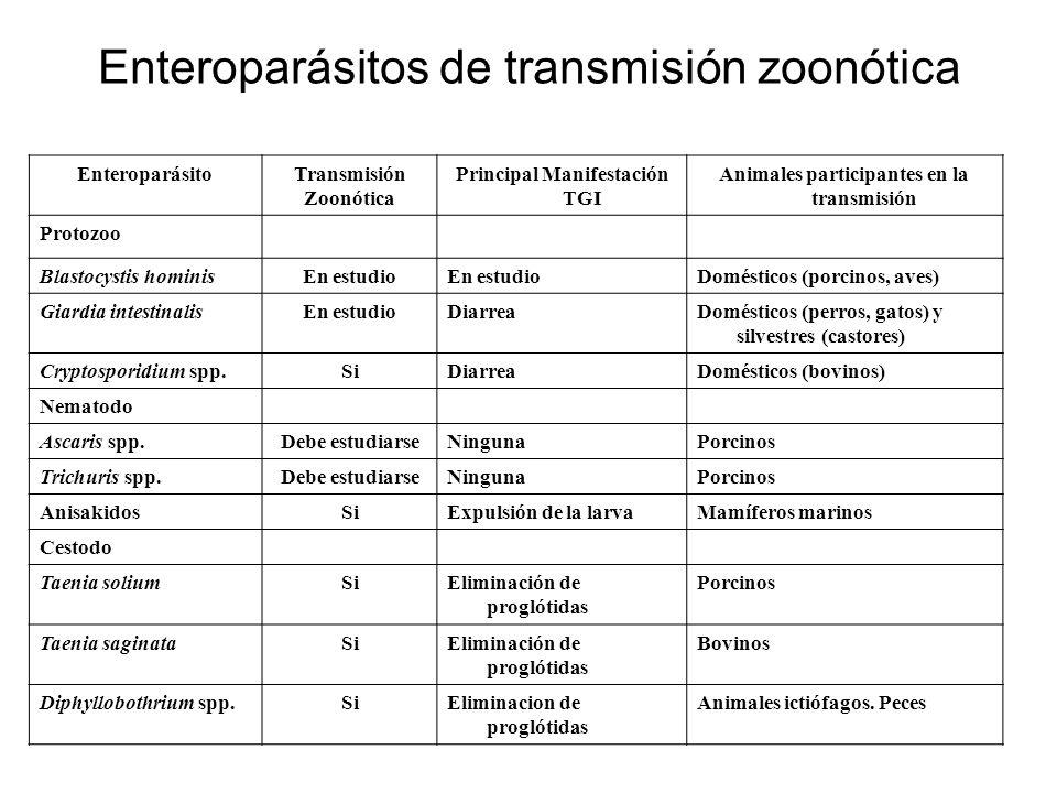 Enteroparásitos de transmisión zoonótica EnteroparásitoTransmisión Zoonótica Principal Manifestación TGI Animales participantes en la transmisión Prot