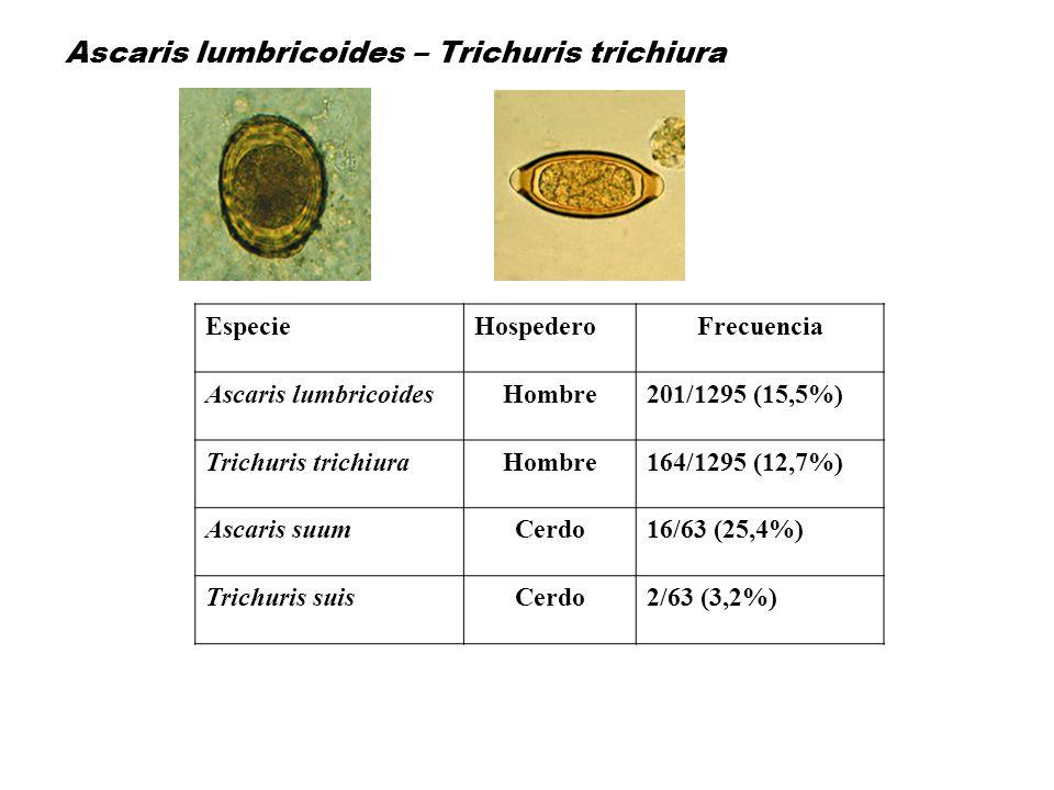 Ascaris lumbricoides – Trichuris trichiura EspecieHospederoFrecuencia Ascaris lumbricoidesHombre201/1295 (15,5%) Trichuris trichiuraHombre164/1295 (12